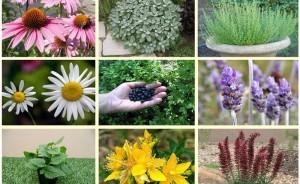 گیاهان-دارویی-700x430